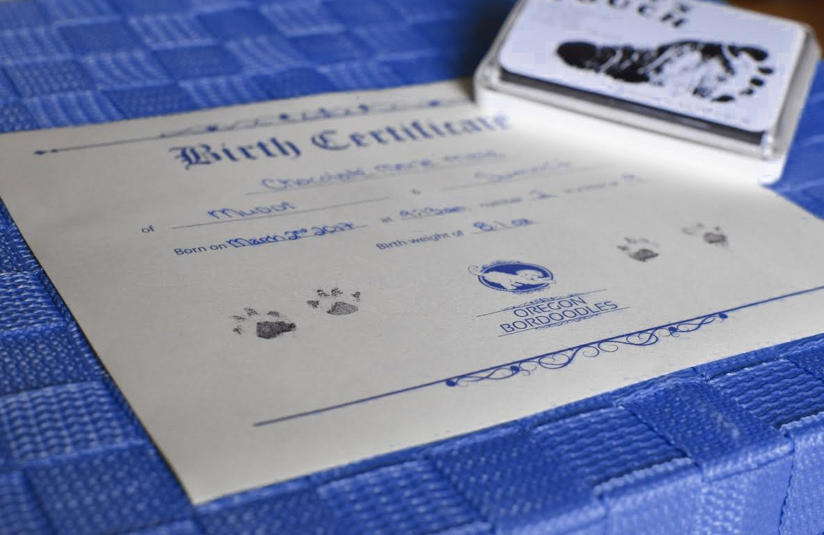 Puppy packet oregon bordoodles training information medical record microchip owner registrationand your puppys birth certificate with real pawprints taken as newborns aiddatafo Choice Image